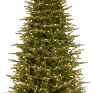Web Code Tree Specials- mention code web1120 in store!