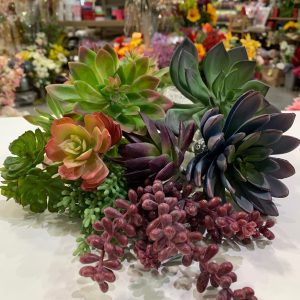 4. Succulents-Great Selection!