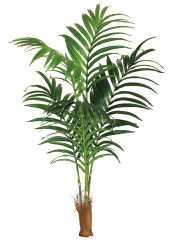 3. New Indoor Plants And Trees